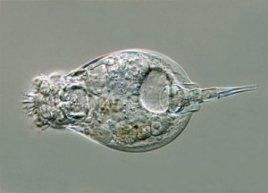 New research may help keep Rotifers out of old age homes.